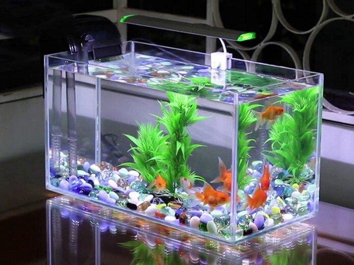 Một bể cá xinh xinh trong nhà sẽ giúp hạn chế năng lượng xấu gây ra bởi hướng nhà ngũ quỷ.